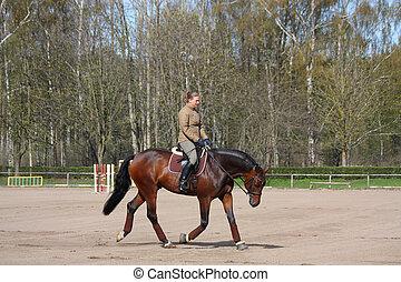 caballo, mujer, trotar, joven