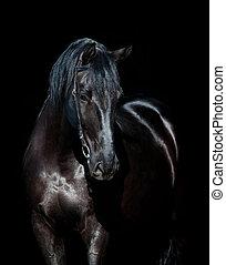 caballo negro, aislado, en, negro