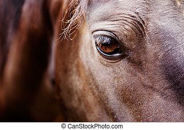 caballo, ojo, detalle