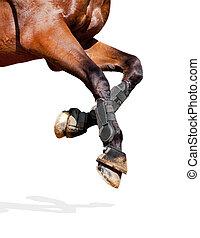 caballo, piernas, aislado, en, white.
