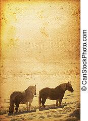 caballo, plano de fondo