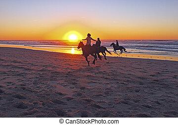 caballo que cabalga, en la playa, en, ocaso