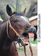 caballo, reír