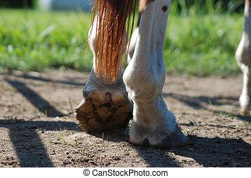 caballo, reclinación encendido, espalda, pie