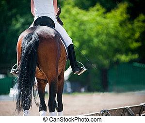 caballo, vista, espalda, jinete
