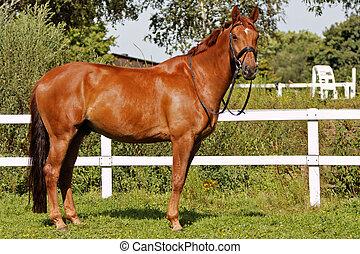 caballo, vista lateral