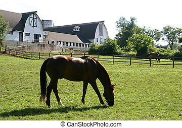 caballo, y, granero