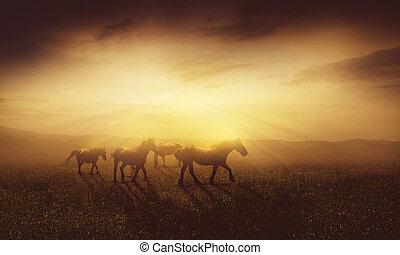 caballos, anochecer