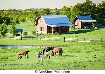 caballos, bluebonnets