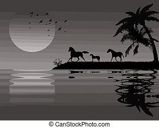caballos, cerca, agua