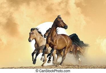 caballos, corra, en, un, salvaje