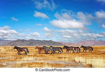 caballos, corriente