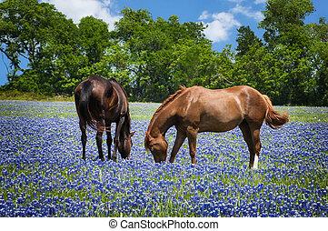 caballos, en, bluebonnet, pasto