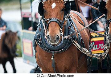 caballos, en, carruaje
