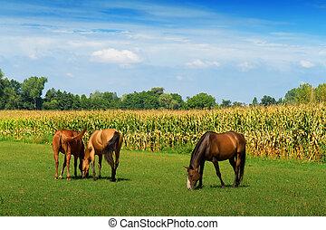 caballos, en, el, pasto