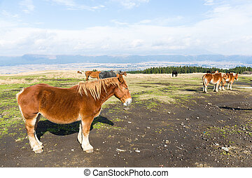 caballos, en, granja