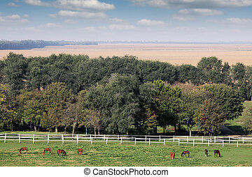 caballos, en, granja, tierras labrantío, paisaje
