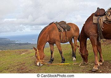 caballos, en, isla de pascua