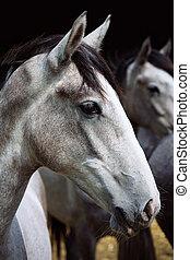 caballos, en la granja
