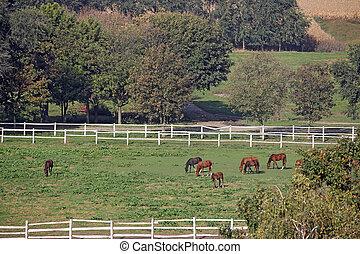 caballos, en, pasto, granja, agricultura
