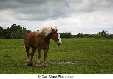 caballos, ennis, rastro, bosquejo, camino, bluebonnet,...