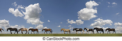 caballos, fila