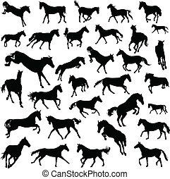 caballos, galopar
