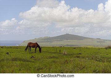 caballos, isla, de, pascua., rapa, nui., isla de pascua