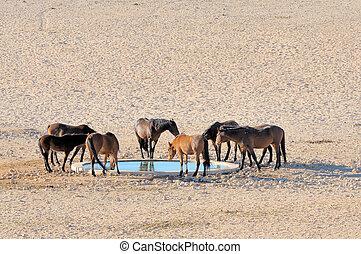 caballos, namib, salvaje