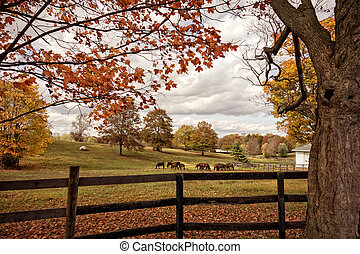 caballos, otoño