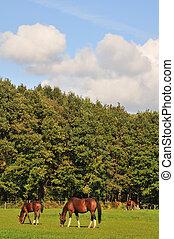 caballos, paisaje