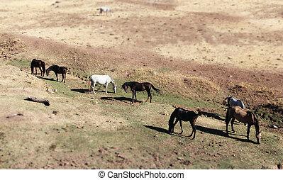 caballos, pasto,  andalusian