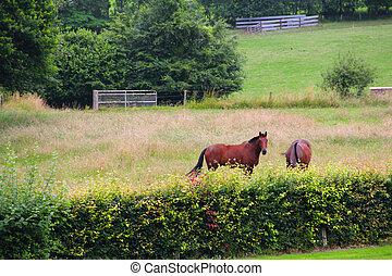 caballos, pasto, dos