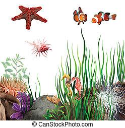 caballos, pez, ocean., fondo, estrella, shells., payaso,...