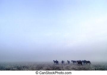caballos, pradera