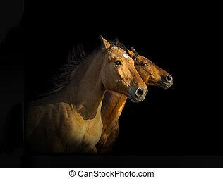 caballos, retrato, mustang, tres