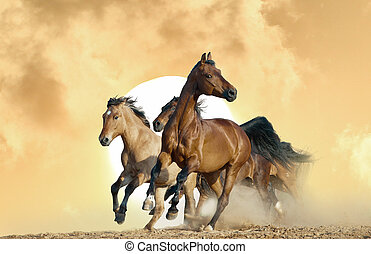 caballos, salvaje, corra