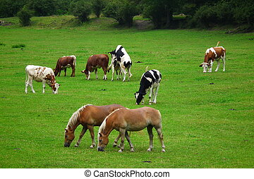 caballos, vacas