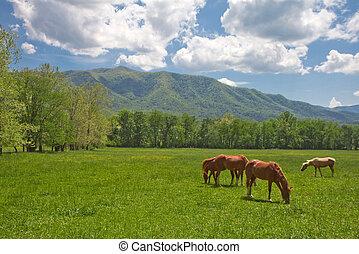 caballos, valle de montaña, salvaje