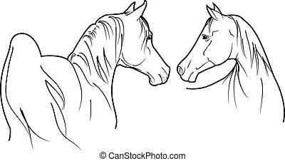caballos, vector