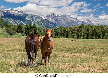 caballos, wyoming
