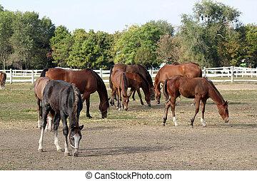 caballos, y, potros, en, granja