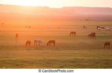 caballos, y, vacas, en, pradera