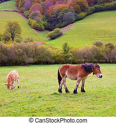 caballos, y, vacas, pasto, en, pirineos, praderas, en, españa