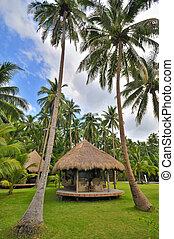 cabana, em, palmas coco