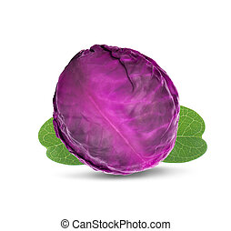 cabbage an isolated on white background