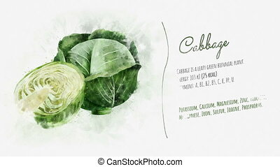Cabbage and its beneficial properties - The image of cabbage...