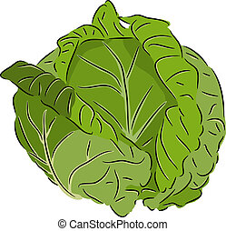 Cabbage - Beautiful vector illustration of colorful fresh...