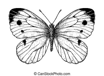 Cabbage butterfly drawing on white background. Element for...