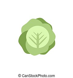 cabbage color icon flat vector vegetable on white background
